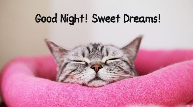 Good Night with Kitty the Cat #goodnight #gn #quotes