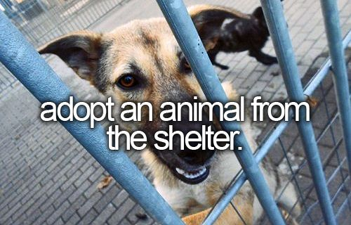 Adopt an animals from the shelter. ADOPT ALL THE ANIMALS already done this one but you can never have to many furry friends :)