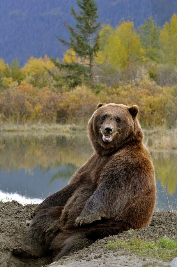 This smiling bear enjoying the scenery Source: http://bit.ly/2qF1dSa