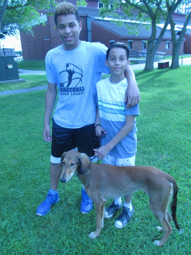 Brothers taking their Saluki on the road for national dog show