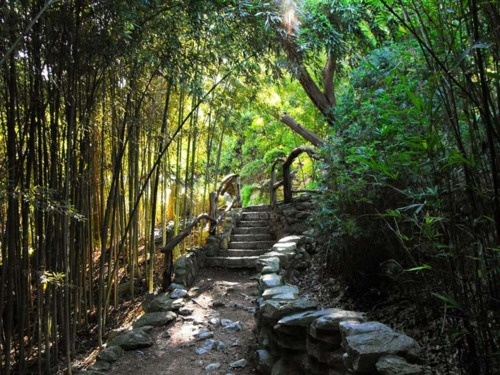 Bamboo Forest   Taniguchi Japanese Garden @ Zilker Botanical Gardens (Austin,  TX)