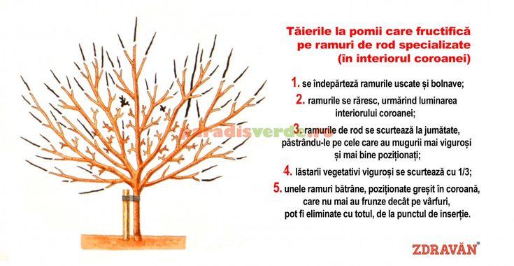 Cum se fac tăierile la pomii maturi   Paradis Verde