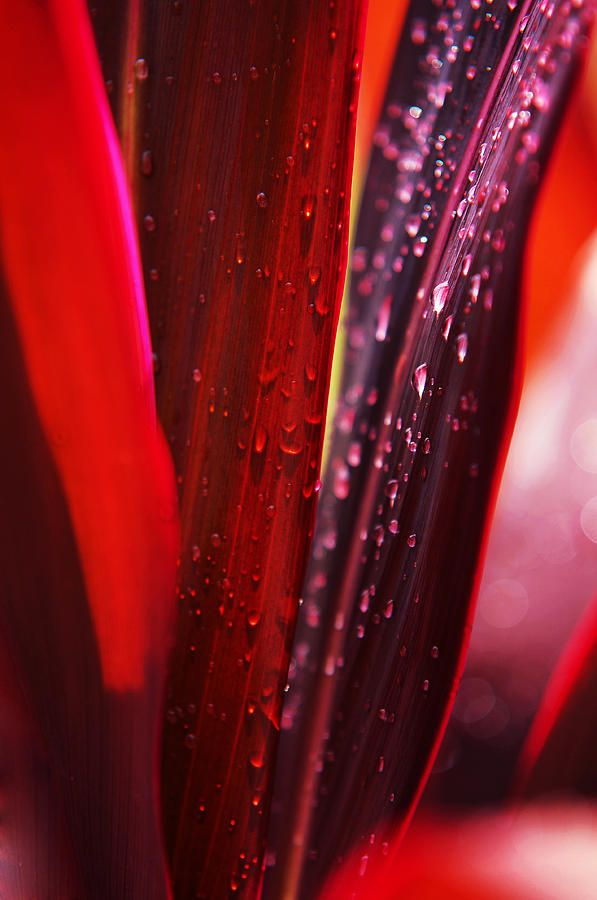 Red Leaves. Macro by Jenny Rainbow