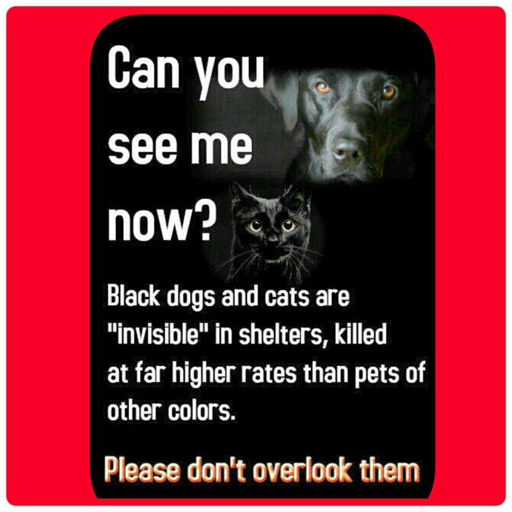 All dogs and cats should be treated the same always