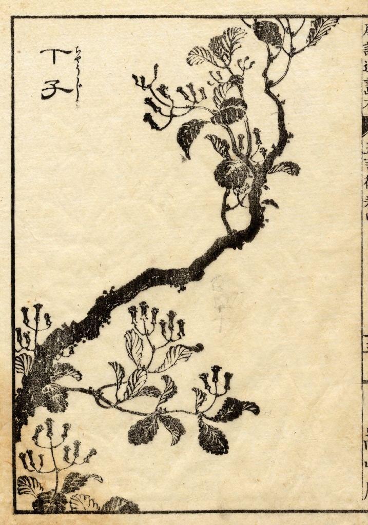 丁字 Clove,  葛飾北斎  Hokusai Katsushika, 1760-1849