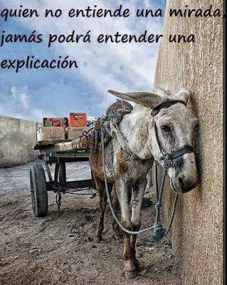 FRASES BONITAS: Quien no entiende una mirada, jamás podrá entender una explicación.