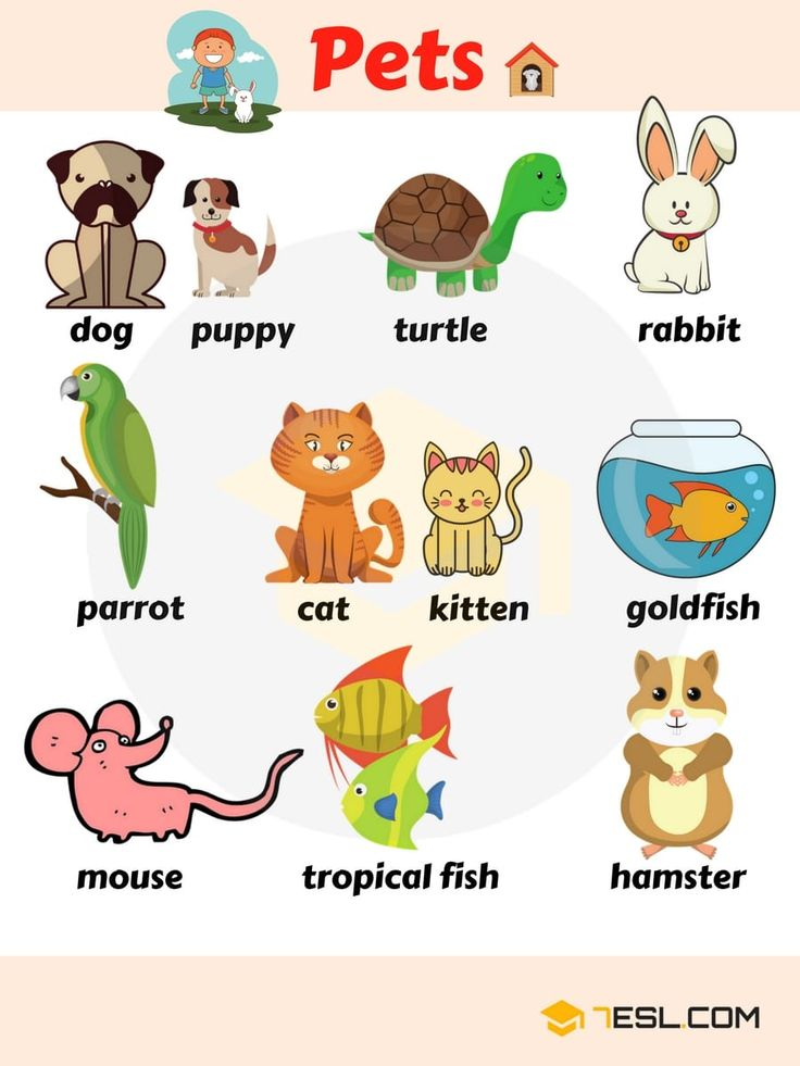 Pet Names List Of Pets & Types Of Pets With Pictures
