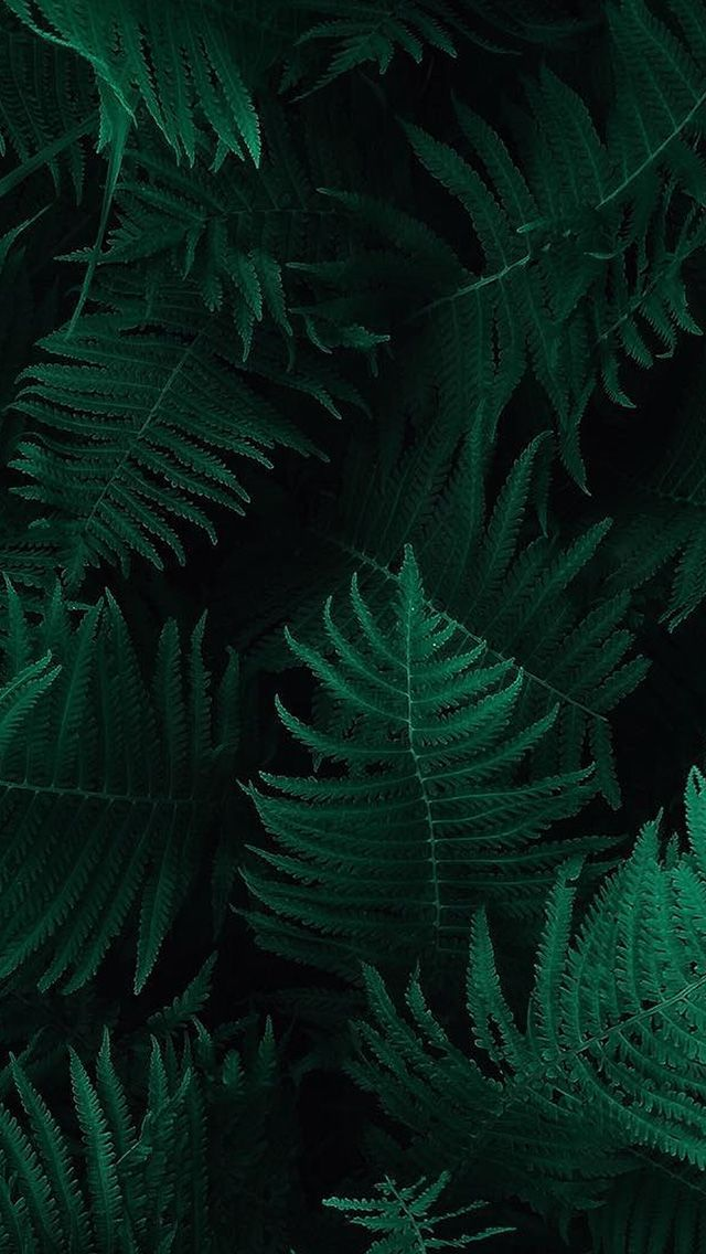 Ob55 Green Leaf Dark Nature Green Leaf Wallpaper Dark Green