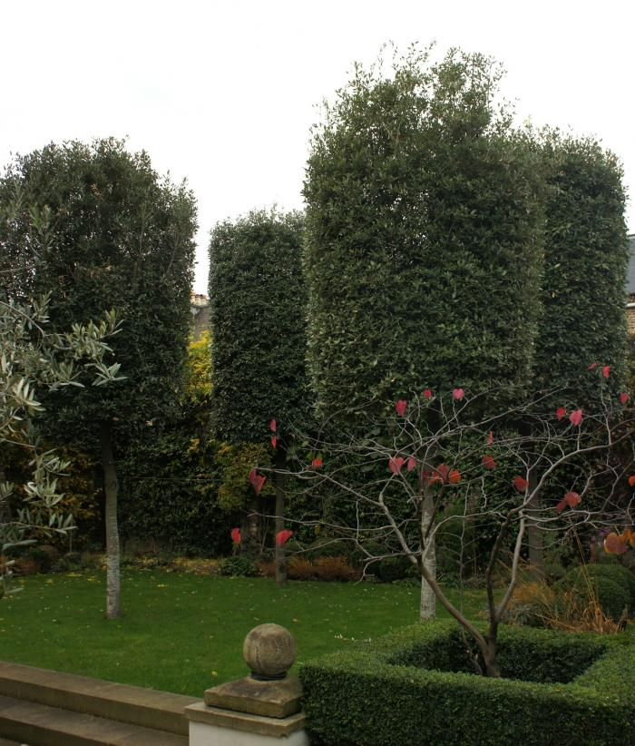 Topiaries and boxwood hedge bring formal French aspects to Neisha Crosland's London garden