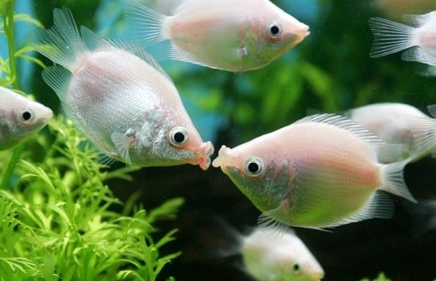 Fishy Kisses | The 25 Cutest Animal Kisses