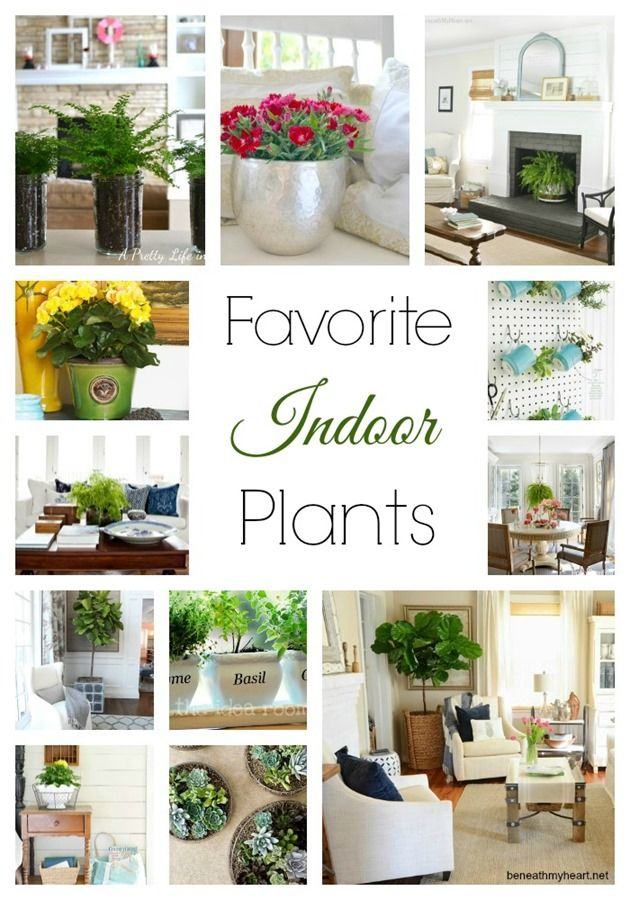 favorite indoor plants http://beneathmyheart.net, container gardening, bring the outside inside
