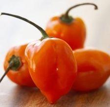 Heirloom Habenero Hot Pepper Seeds | Grow Habenero Hot Peppers