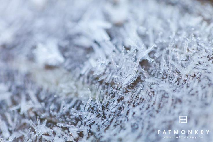 """""""Winter Diamonds""""  © Ann Sissel holthe  www.fatmonkey.no"""