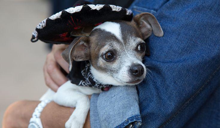ちいさな犬のお世話小型犬や子犬の安全と健康を守ための8つのこと