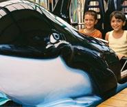 SeaWorld San Antonio | Family Vacation Theme Park