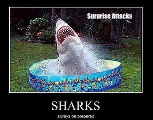 I'm just sayin.....: Funny Sharks, Funny Captions, Children, Funny Stuff, Childhood, Kids, Sharks Week, Sharks Attack, Kiddie Pools
