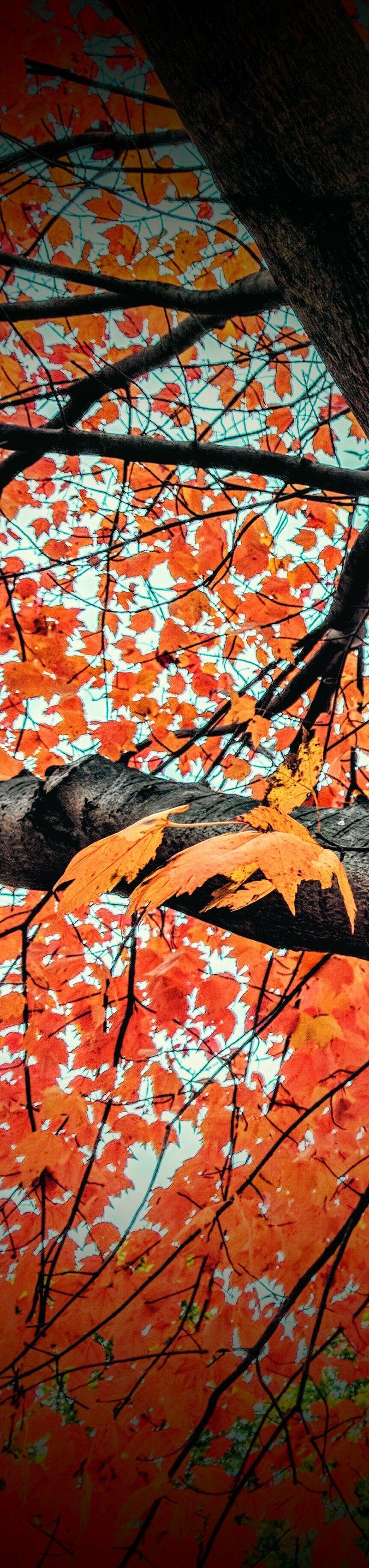 Autumn fever. Photo.m.2017