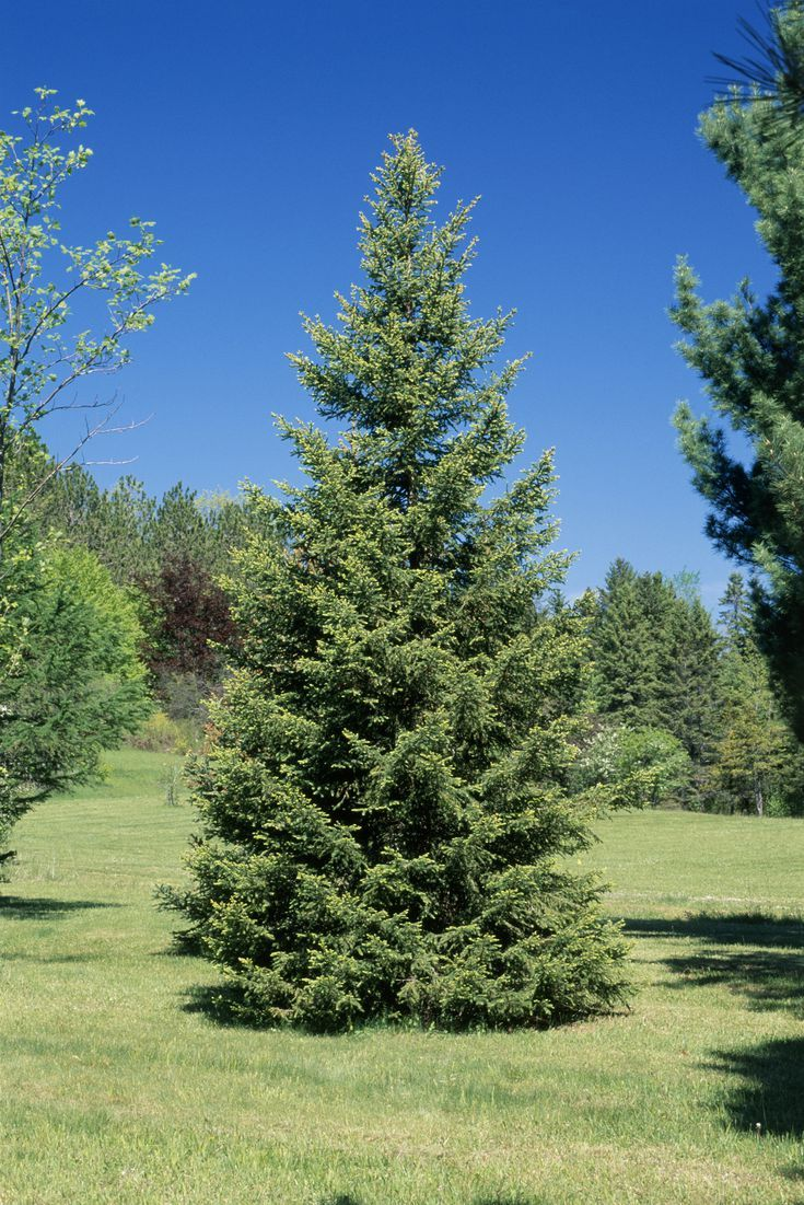 These Tough Trees Are Perfect For Growing In Zone 3 Backyard Landscaping Tree Zone 3