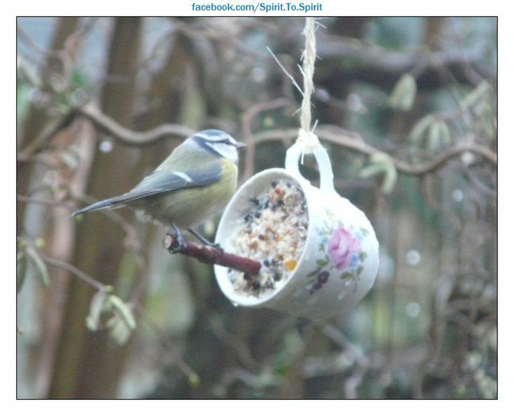 Bird feeder  Use gelatin, peanut butter or organic tallow to make a suet mixture and put pack into a cup for wild birds to enjoy though winter / spring.