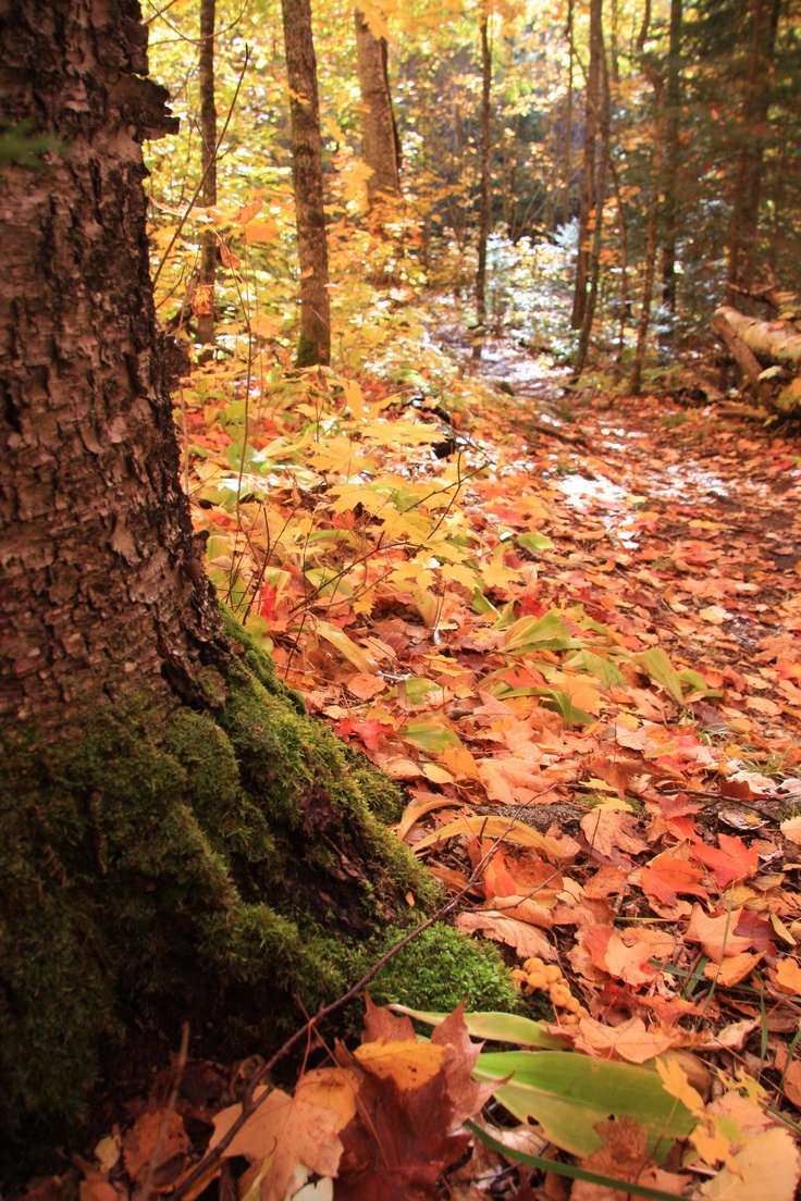 Beautiful Fall Colors on a hike to Lutsen. North Shore, MN #MSPGetaway