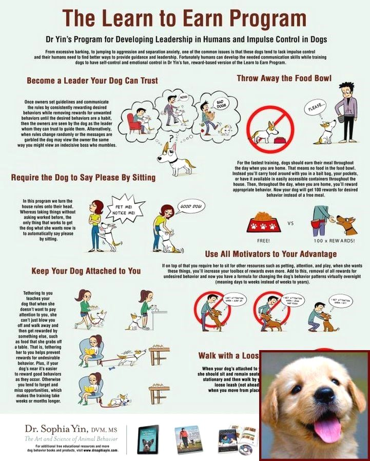 House Training A Puppy Jack Russell And How Much Are Dog Behavior
