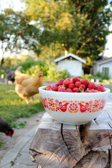 Country Living ~ fresh strawberries- cover art: Farm Fresh Recipes from Missing Goat Farm - Heather Cameron, book.