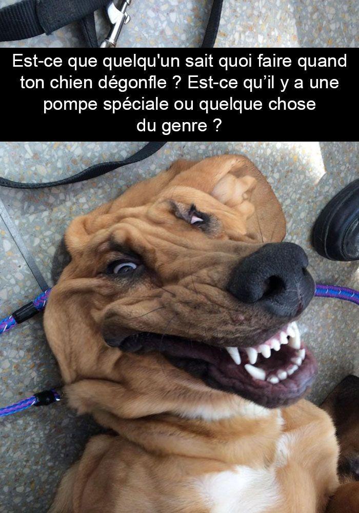 15 photos de chiens avec des sous-titres bien huilés humour chien humour animaux humour web ...