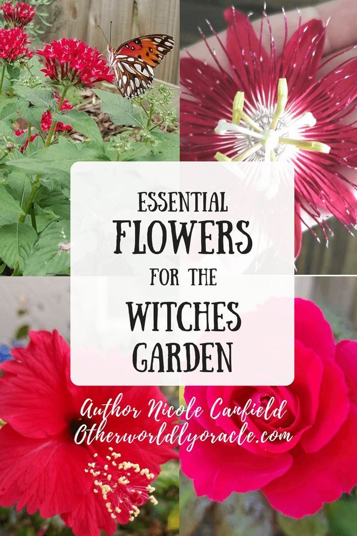 Every Witch Has Her Garden Here Are The Essential Flowers For The Witches Garden Rose Sunflower Moonflower Pentas Witch Garden Witchy Garden Witch Herbs