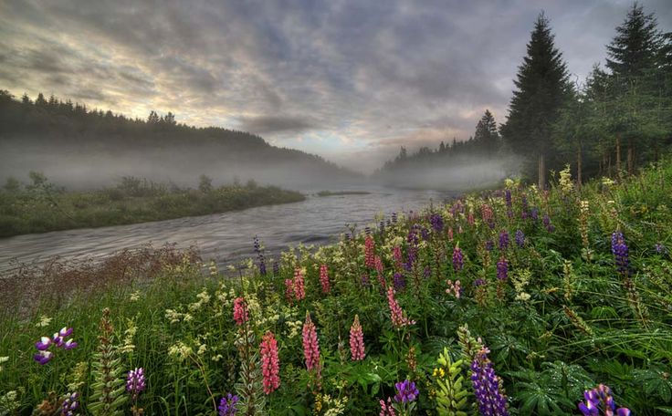 Photograph lupins by ivar hole on 500px