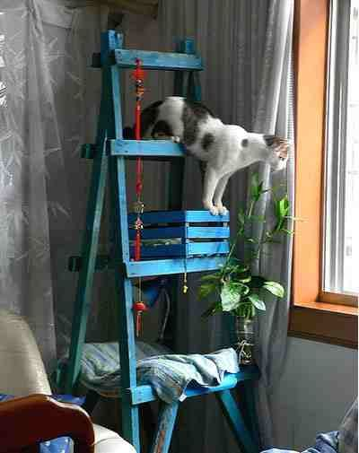 "It's so hard to find a cat tree worthy of coming home with you. I mean, no offense, but those carpeted towers can sometimes look a little ""cat lady."" ...So what happens if you bring an old ladder, a wine box, and a piece of wood to your cats? According to Karin in China, pure joy. -http://www.pawesome.net/2010/03/make-a-cat-tree-on-the-cheap-pet-projects/"