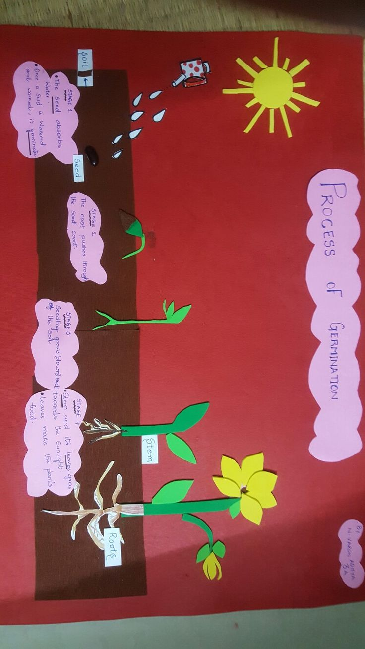 Spring Decorations For Classroom