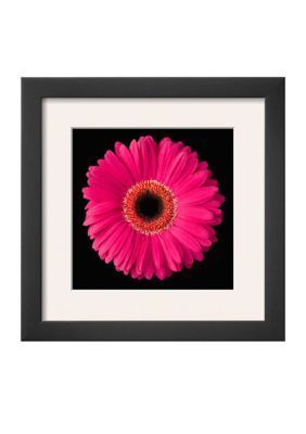 Art.com  Gerbera Daisy Pink Framed Art Print - Online Only