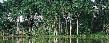 Parque nacional natural de Los Katíos, Colombia.