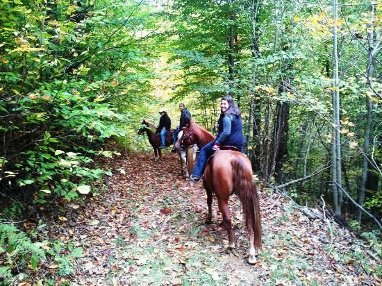 4. Wolf Laurel Stables: The Stable Offering A Magical Horseback Ride
