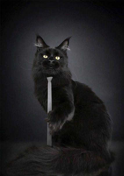 #blackcat wearing a white #necktie
