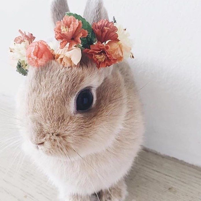 Happy Easter everybody!  #easter #bunny #worldpeace #peace #wedding #bruiloft #hair #bridal #trend #flowers #rabbit #fashion #bridalfashion #weddingday #diy #animals #blonde #vintage #bridallook #bride #bruid #boda #braut #engaged #verloofd by budgetbridenl