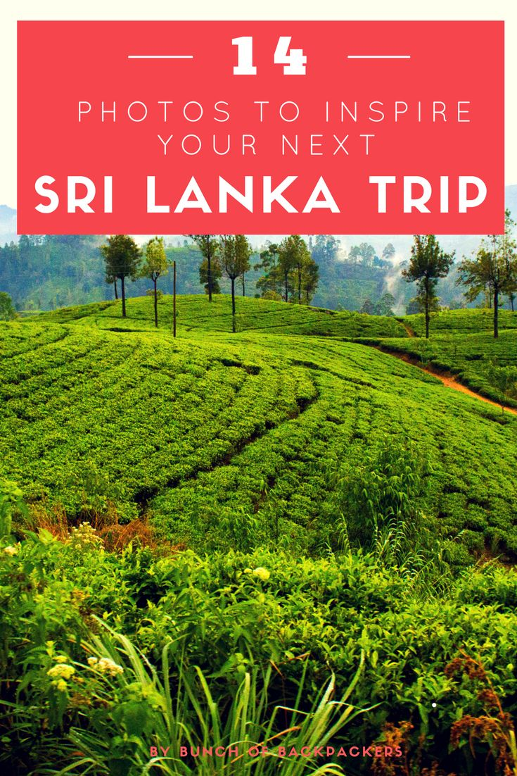 Sri Lanka is compact, diverse and beautiful. It also offer amazing food, cool activities (such as diving, surfing, hiking and safari's) and gorgeous white-sand beaches. These 14 photos will definitely get you in the mood for your Sri Lanka travels | By Bunch of Backpackers #srilanka #asia