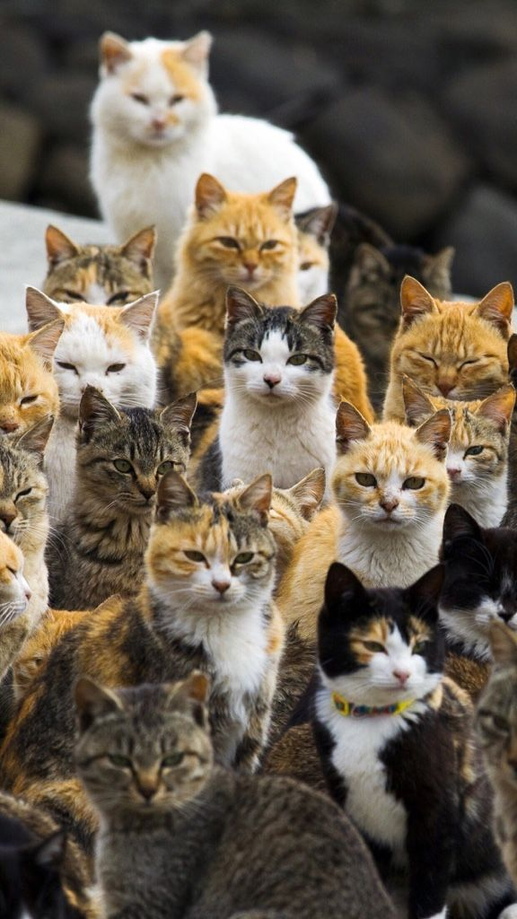 Many cats - Adorable cats - So many in one place.
