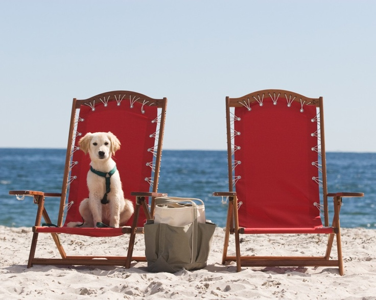 A Dog Friendly Resort That Throws Great Wedding Maine S Inn By The Sea