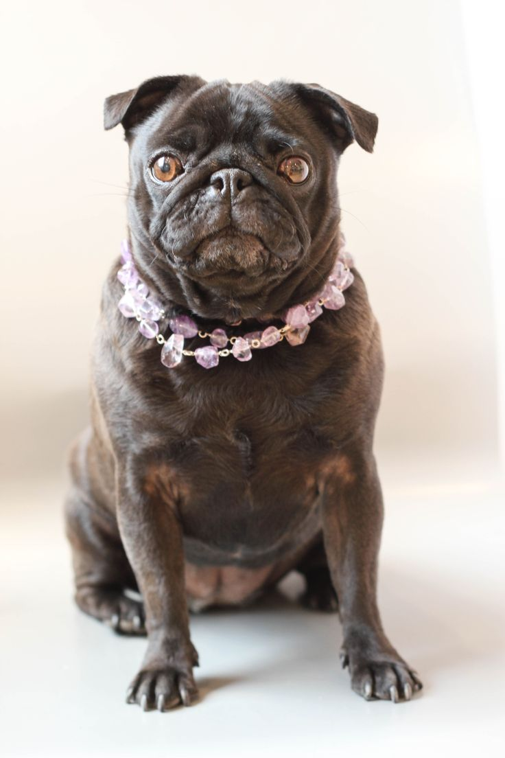 Oh my puggness she is adorable!
