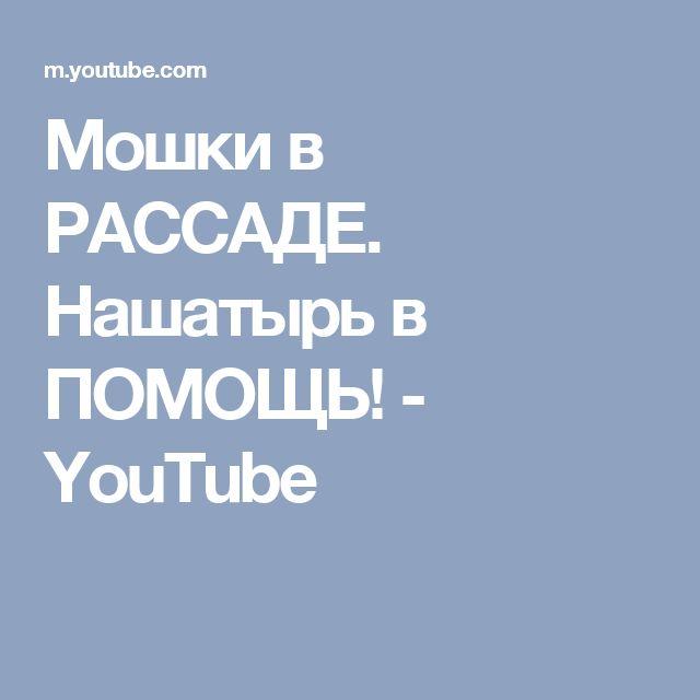 Мошки в РАССАДЕ.  Нашатырь в ПОМОЩЬ! - YouTube