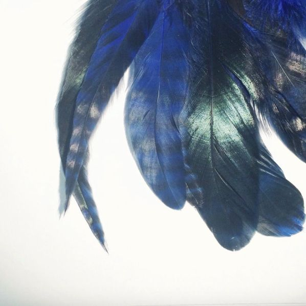 #feathers #natural #craftsmanship #blue #texture #details
