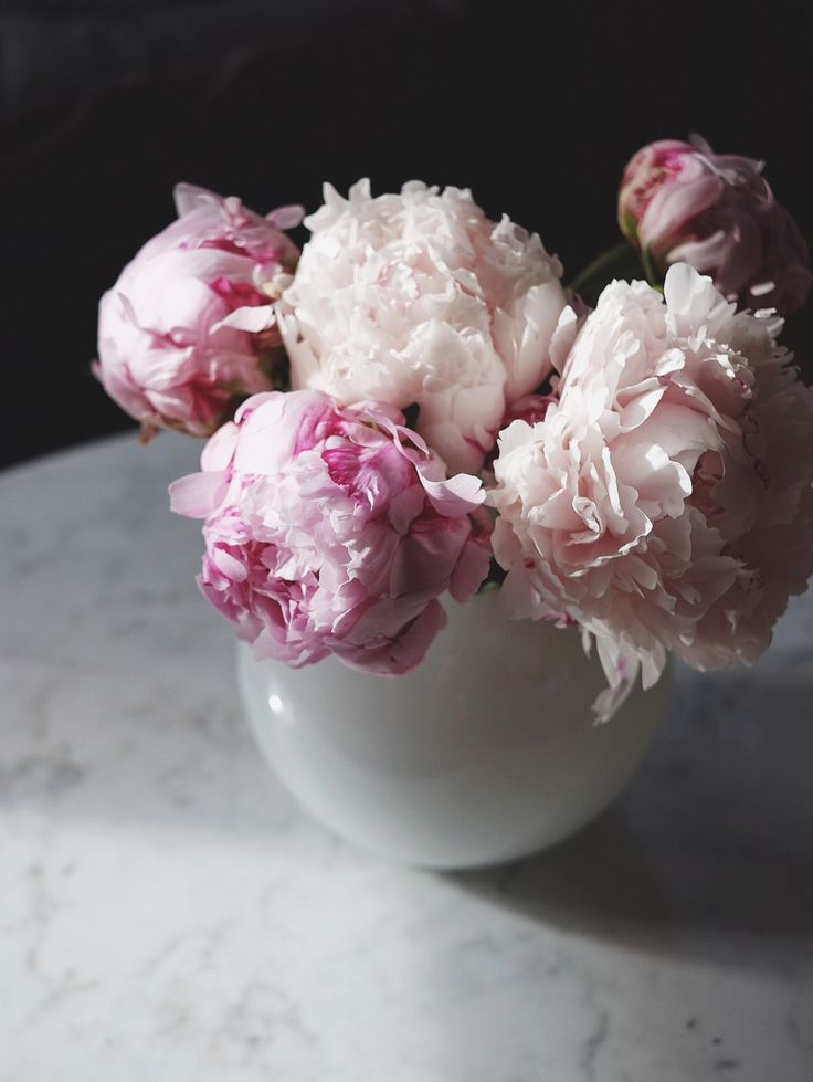 Morning light and peonies