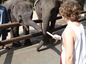 Sleeping With The Elephants In Bali - Exploramum & Explorason