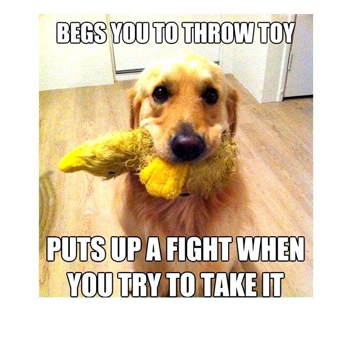 Bahahahaha Dog Memes So Funny Dog Meme Kiss Funny Dog Memes Dog Logic Dog Memes