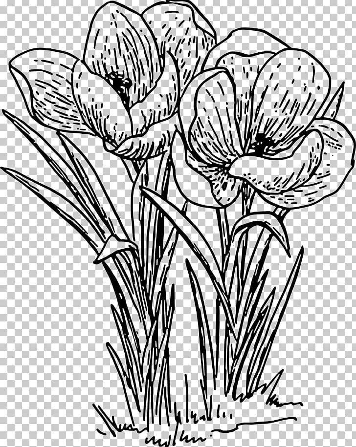 Crocus Line Art Png Artwork Black And White Black Rose Botany Color In 2020 Flower Drawing Flower Line Drawings Plant Drawing