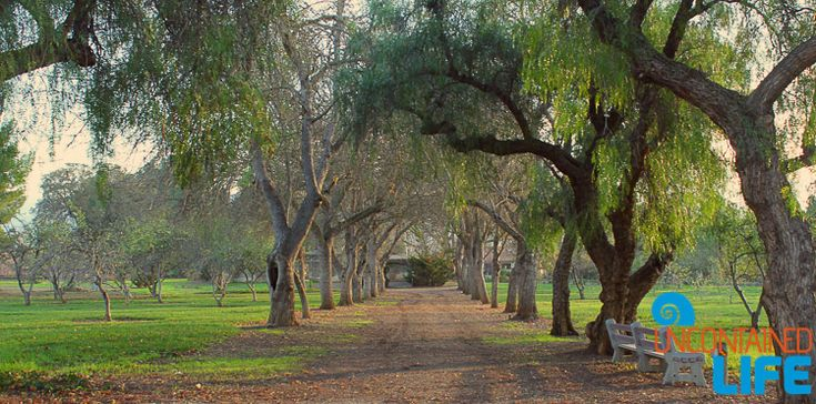 Tree Tunnel Ravenswood Livermore CA