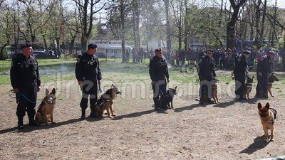 Guard dogs - gendarmes training demonstration.