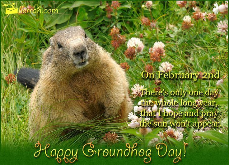 Happy Groundhog Day groundhog day quotes groundhogs day groundhogs day quotes groundhog day happy groundhogs day happy groundhog day quotes