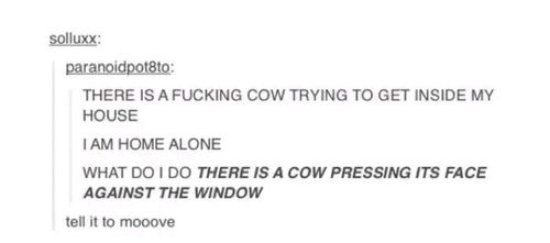 Where the hell do you live when a cow tries..what